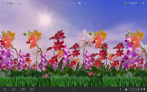 Orchids Free Live Wallpaper