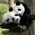 Lovely Panda   Gallery logo