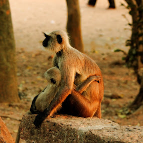 Love And Care by Vaibhav Nahar - Animals Other Mammals ( animal, monkey )