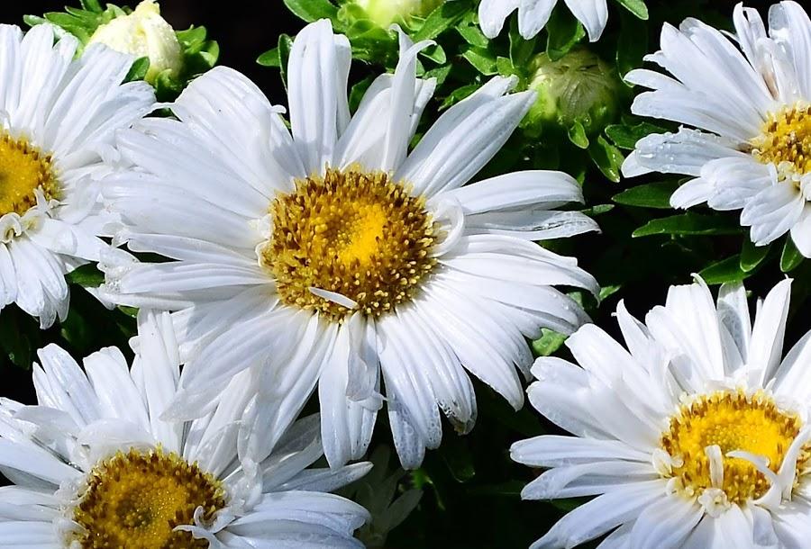 met hari minggu GBU by Sianne Kainde Nening - Flowers Flower Gardens