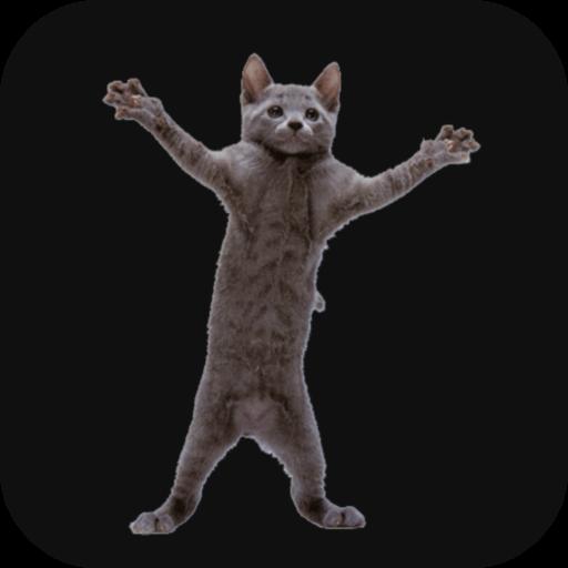 Картинка кот танцует анимация