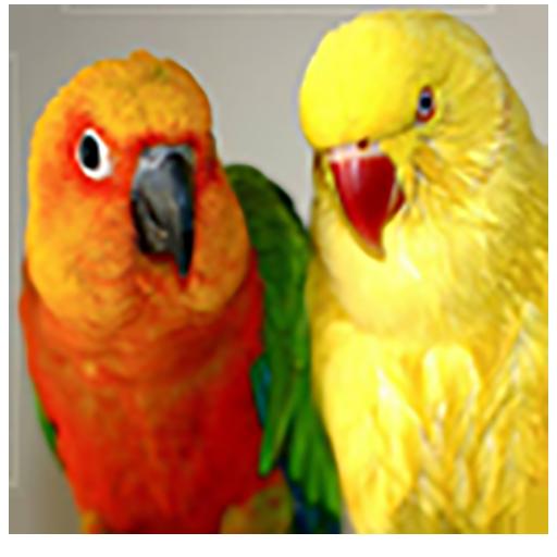 Cutest Parrots Wallpapers HD