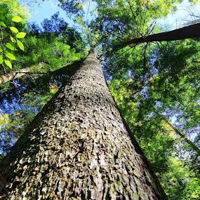 A tree up close.. by Mili Shrivastava - Nature Up Close Trees & Bushes ( nature, tree, green )
