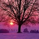 3D Winter sunrise logo