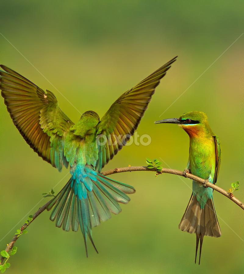 Hands Up by Jineesh Mallishery - Animals Birds