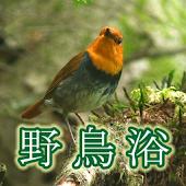野鳥浴 ハイビジョン映像と鳴き声で愉しむ... トレーラー