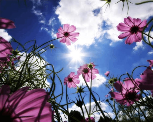 春天的花朵壁紙