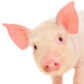 Swine Diet Formulation