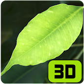 Refreshing Leaves 3D Wallpaper