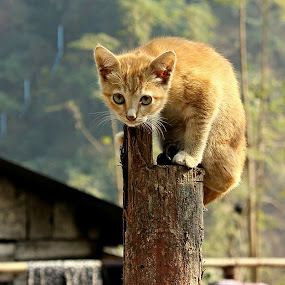একটা ছোট্ট বেড়াল ছানা ছিলো। এক দিন সে.................... তারপর?তারপর.............গল্প শেষ!!!!! by Debapriya Bhattacharya - Animals - Cats Playing