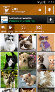App.Cat Studio English