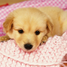 Cute Dog Live HD Wallpapers icon