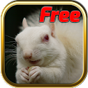 Free Albino Animal Puzzle Game