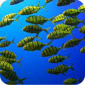 The shoal of fishes