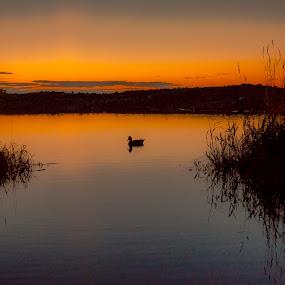 Duck Silhouette behind the Beach by Gordon Follett - Landscapes Beaches ( water, sunset, duck, beach, landscape,  )