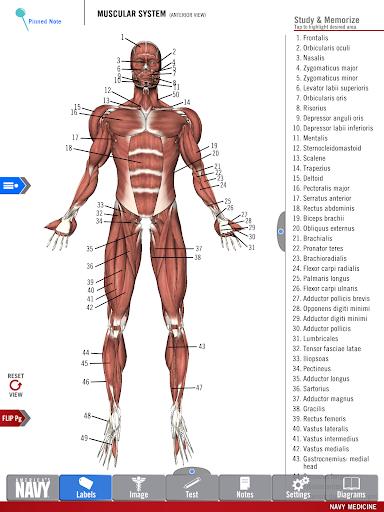 玩免費醫療APP 下載Anatomy Study Guide app不用錢 硬是要APP
