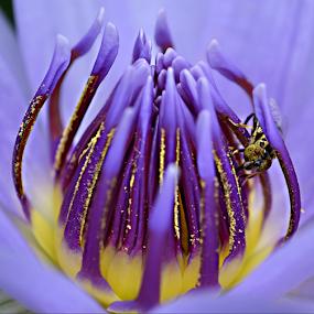 by Keple MN - Flowers Single Flower