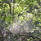 lovely morning web