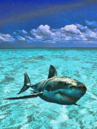 玩解謎App|Shark Puzzle Game免費|APP試玩