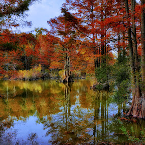 Walk among the Bald Cypress by James Gramm - Landscapes Forests ( water, color, fall, reflections, trees,  )