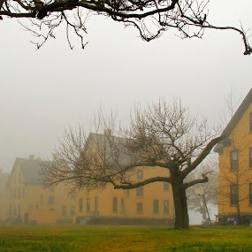 Houses in fog by Bill Morris - Buildings & Architecture Decaying & Abandoned ( foggy, houses, fog, trees, yellow, architecture )