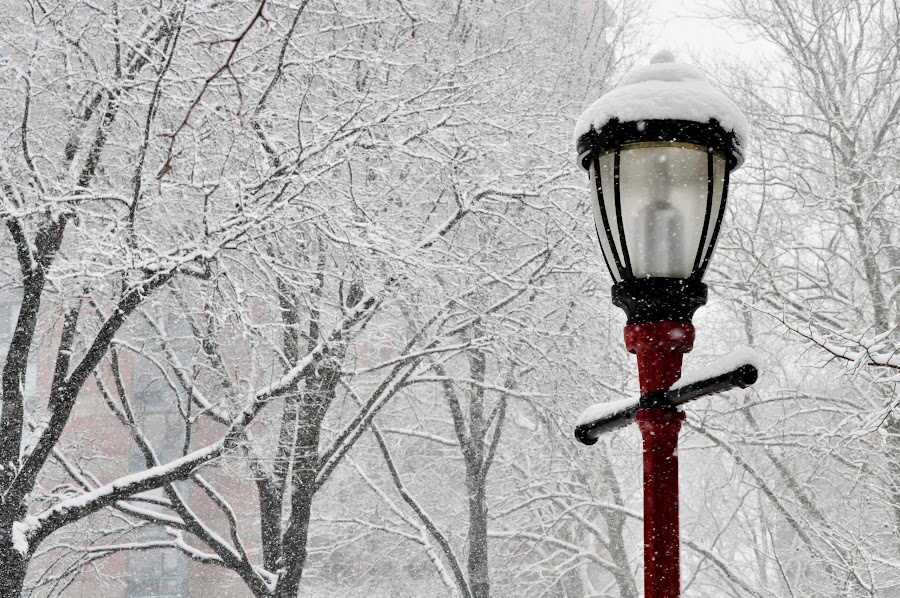 Snow Wonderland Red Lamp  by Diana Desrocher - City,  Street & Park  City Parks ( snowfall, red, park, tree, street, snow, fall, lamp, trees, branch, branches,  )