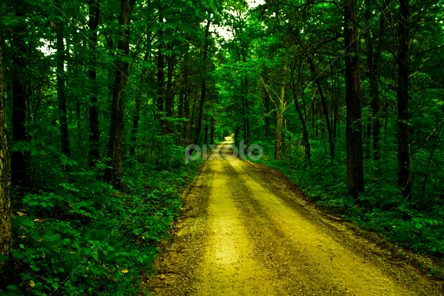 by Joel Eade - Transportation Roads ( awesome, gorgeous, secluded, green, beautiful, trees, forest, road, perfect, dirt, pretty, country,  )