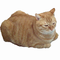 Cat Runner CHIP icon