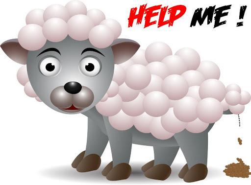Sheep Crazy