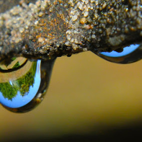Eyes of water by Ruth Holt - Novices Only Macro ( drip, water, trees, reflect, eyes,  )