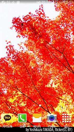 免費下載娛樂APP|Autumn Red LiveWallpaper app開箱文|APP開箱王