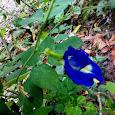 Flora N Fauna of Kochi
