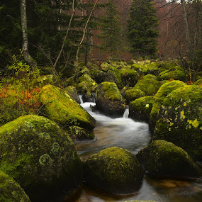 Late autumn by Stani Georgiev - Landscapes Waterscapes ( stream, mountain, wood, autumn, rock, forest )