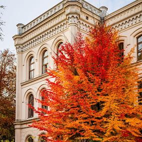 Vegova by Jernej Lah - City,  Street & Park  Street Scenes ( red, fall, historical, yellow, leaves,  )