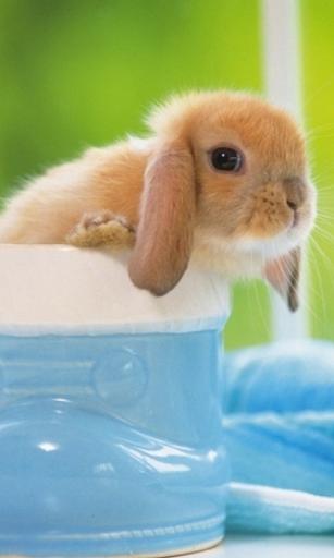 ふわふわのウサギの壁紙