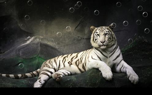老虎動態桌布