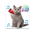 Real Cat Sounds icon