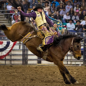 Saddle Bronc by Hans Watson - Sports & Fitness Rodeo/Bull Riding (  )