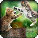 Funny Cat Wallpapers icon