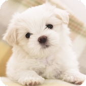 Puppy dog Live Wallpaper