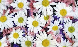 Screenshot of Chamomile Wallpapers