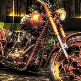 Harley Davidson by Max Bowen - Transportation Motorcycles