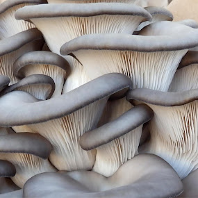 Mushrooms by Cliff Oakley - Food & Drink Fruits & Vegetables ( market, nature, mushrooms.fungi, food )