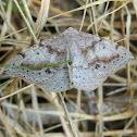 Taxeotis perlinearia