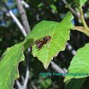 Stick Nest Brown Paper Wasp