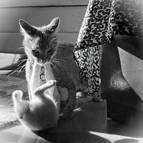 cats at play by John Kolenberg - Black & White Animals ( cats, mexico, foor, tile, play, sunlight,  )