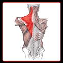 Anatomi Kas Sistemi