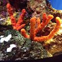 Red finger sponge