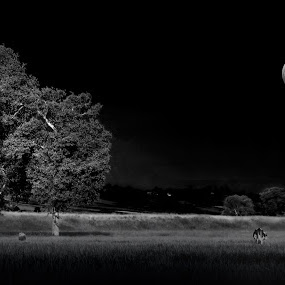 summer night by Ionel Covariuc - Black & White Landscapes ( countryside, picture, moon, black and white, summer, night, landscape )