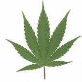 Weed App
